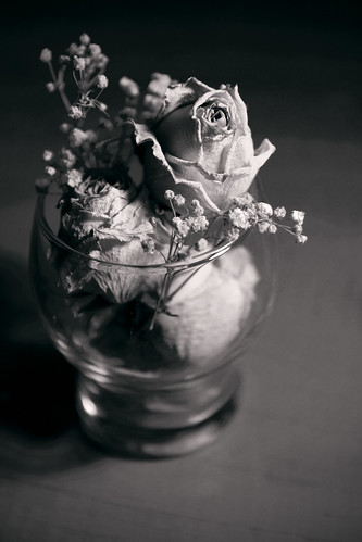 45:365 Roses
