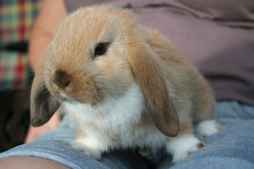 Rabbit Baby | by Merete :)