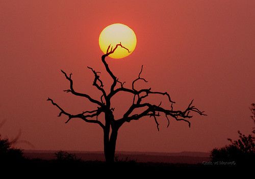 Sunset at Balule | by chris.merwe