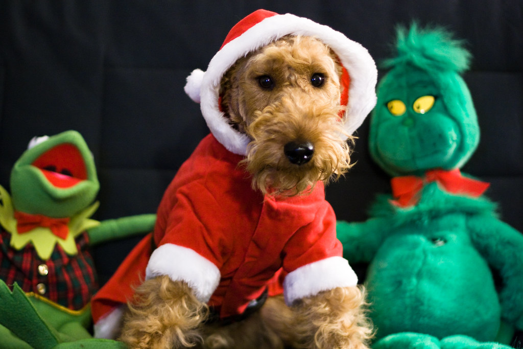 Merry Christmas from Harper, Kermit, and the Grinch | Flickr
