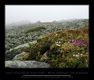Alpine Flora - Northern Presidentials, NH | by Mountain Visions