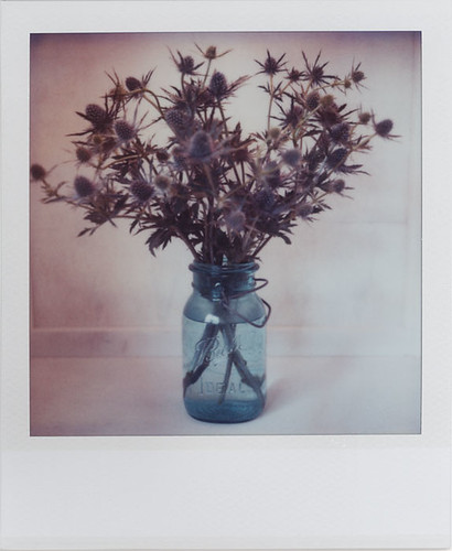 Ball Jar With Thistles | by futurowoman