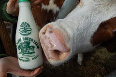 Cow's Raw Milk | by Mike Grenville