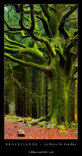 Broceliande - le hêtre de Ponthus (3) | by philippe MANGUIN photographies