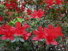 JENKINS IN MAY | by PHOTOPHANATIC1