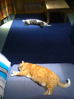 Two rays of sunshine attract a cat each | by Major Clanger