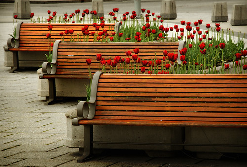 Tulips & Benches | by Vince Alongi