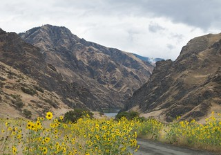 Sunflowers At Pittsburg Landing, Hell's Canyon | by A.Davey