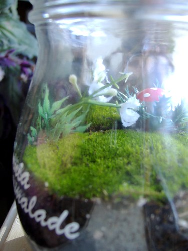terrarium close-up | by KnitXcorE