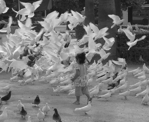 A girl and pigeons | by kojotomoto