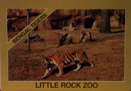 Arkansas  Bengal Tigers  Little Rock Zoo  JustMeSKJ
