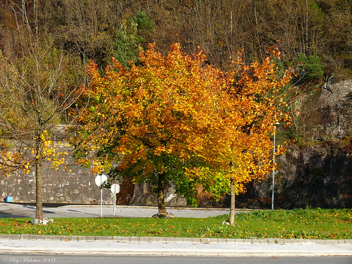 Fall in a roundabout | by Michelsen Photography