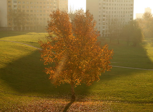 City Tree in Autumn Morning | by johan.pipet