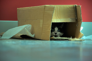 Cat in a Box | by Chris Fourney