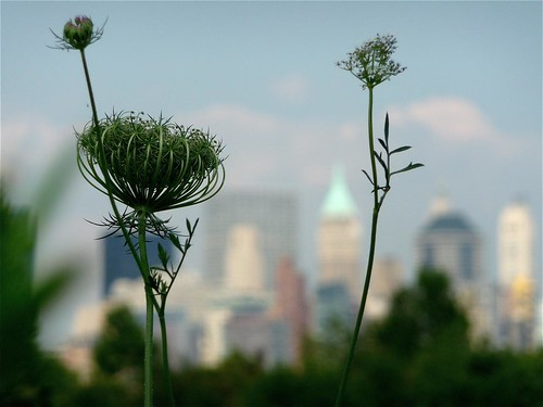 more weeds and the city | by undertheturnpike
