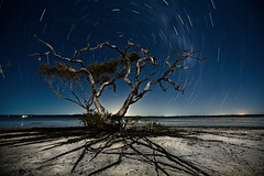 Tree alive at night | by Garry - www.visionandimagination.com