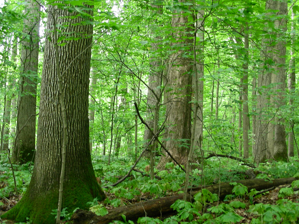 Mature in forest