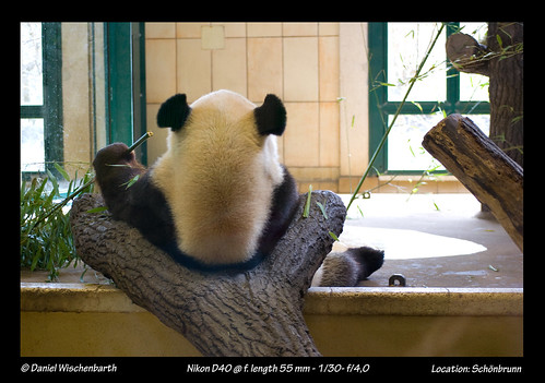 Long Hui, Panda relaxing | by Delusional Danny