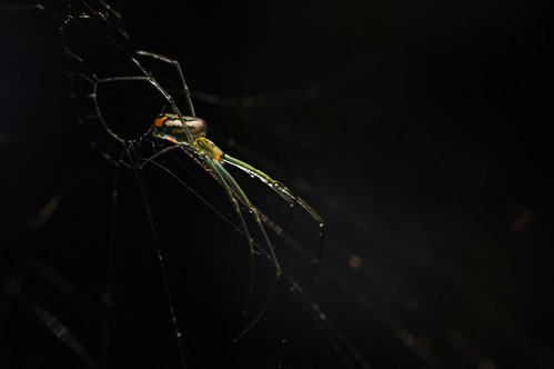 Backlit Spider | by J e n s