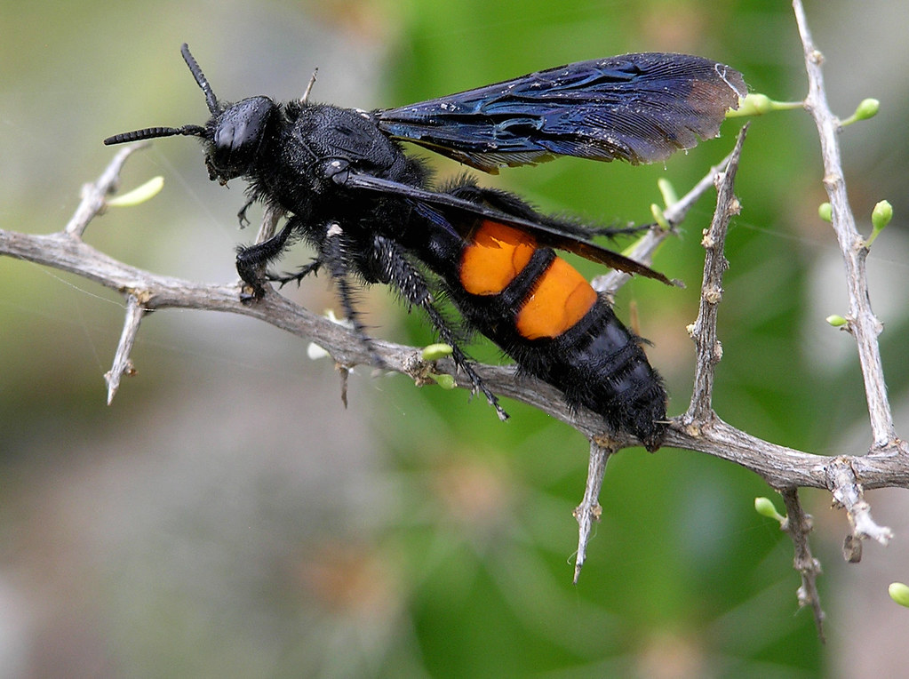 insectos y ar cnidos del jard n de piedras flickr