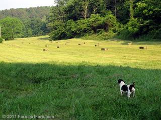 haying 1 | by Farmgirl Susan