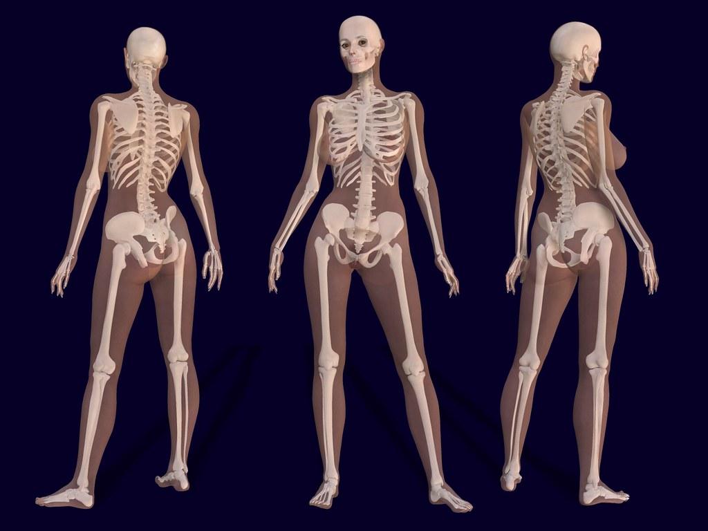 3D Female Skeleton Anatomy | 3D render of a female skeleton … | Flickr