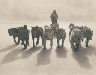 Huskies pulling sledge | by State Library of New South Wales collection