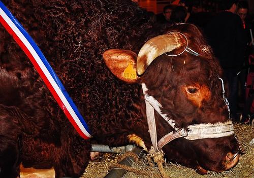 15 1er mars 2009 paris porte de versailles salon de l 39 ag for Porte h salon de l agriculture
