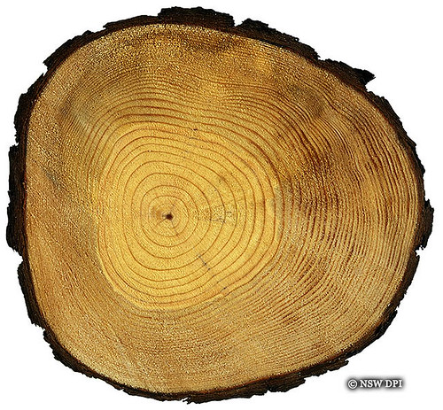 Definition Of Tree Ring