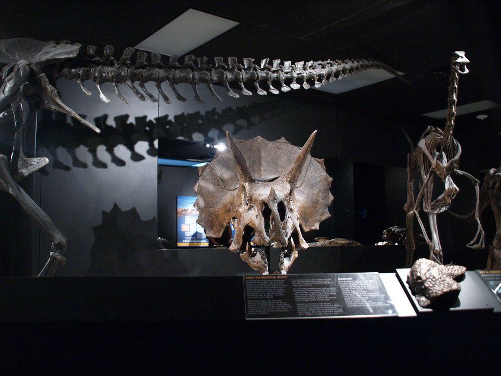 Stock Photo Alfred C Glell Jr Hall Of Paleontology Houston Museum Natural Science Tx 85 Foot Long Diplodocus Skeleton