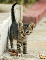 1st Steps in Big New World (Feral / Stray kitten) | by Roeselien Raimond
