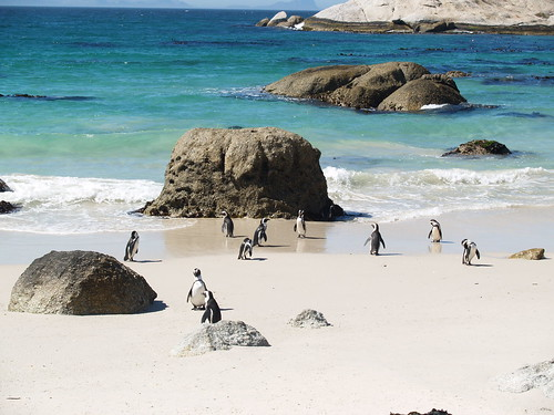 African Penguins in Cape Town | by JenniKate Wallace