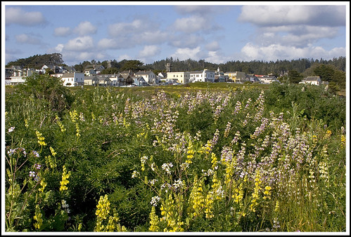 Wild Lupines and Main Street, Mendocino Village | by Rita Crane Photography