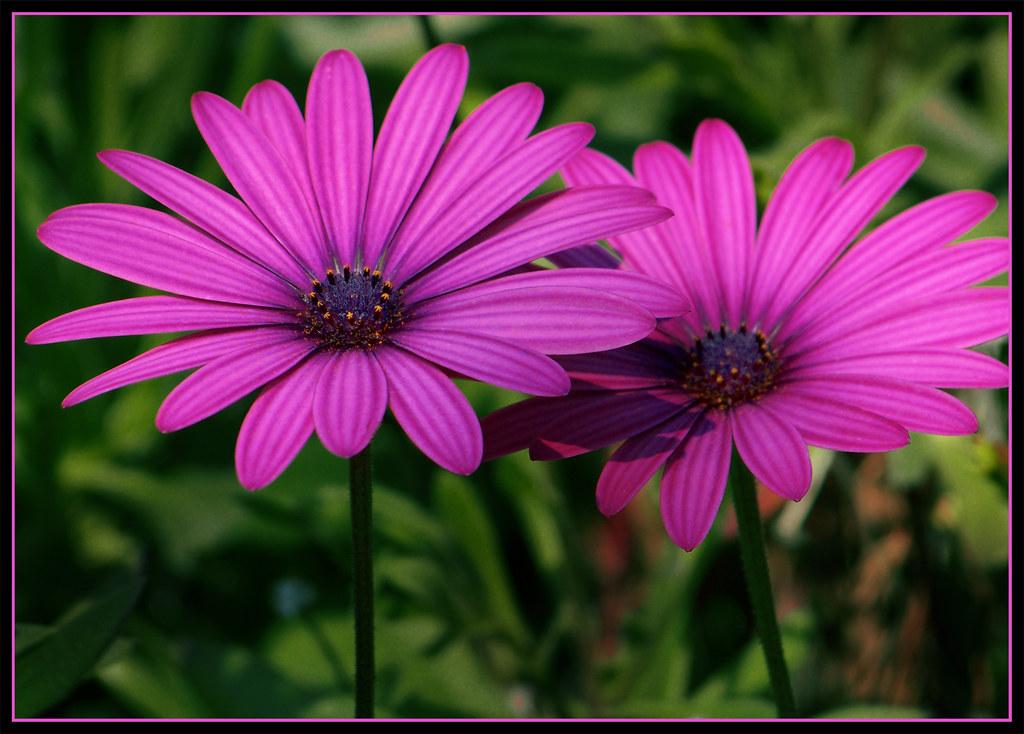 Flores Lilas Con Rosas Sobre Fondo: Flores Lilas Nombres. Trendy Flores Lilas Nombres With