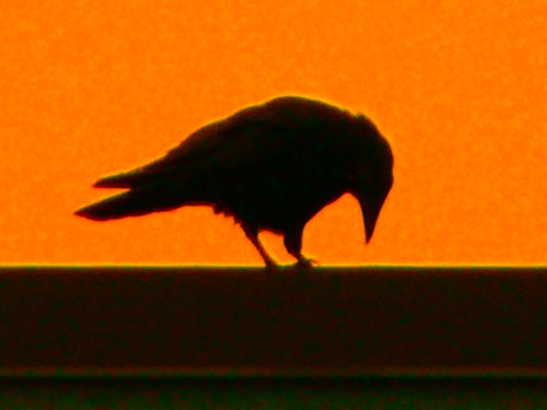 crow | by crowdive