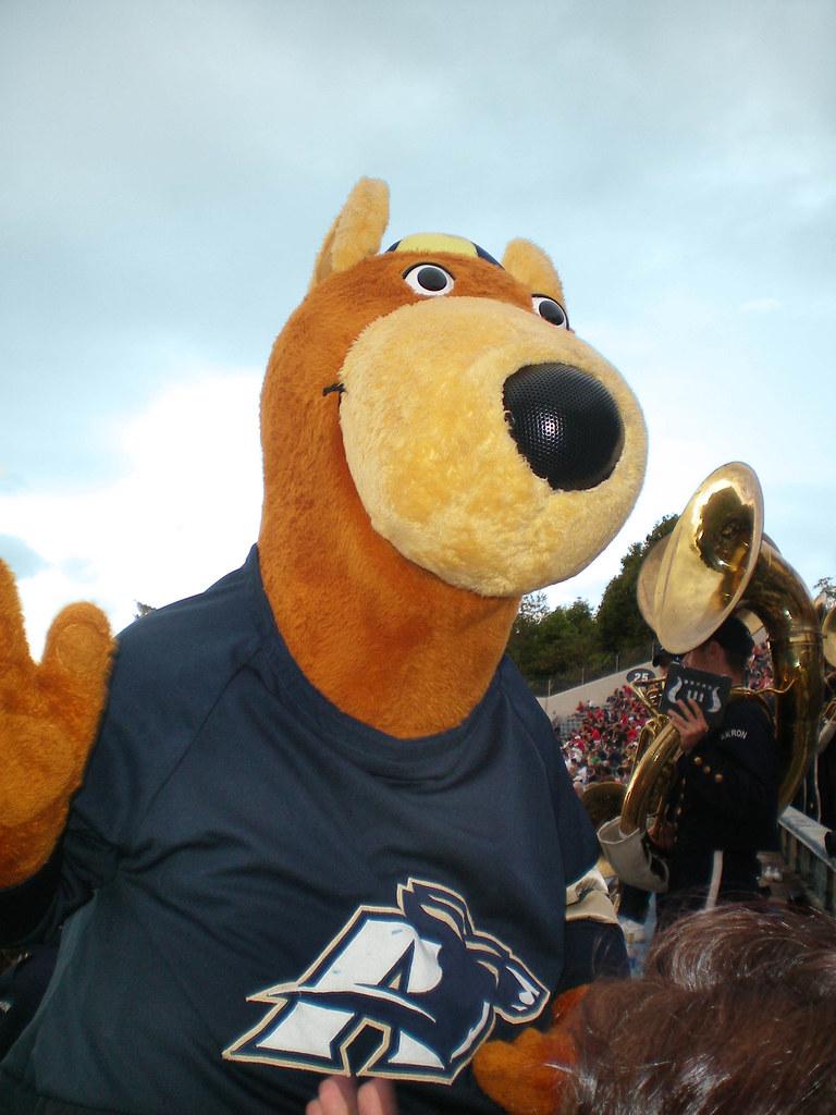 university of akron mascot zippy caitlin flickr
