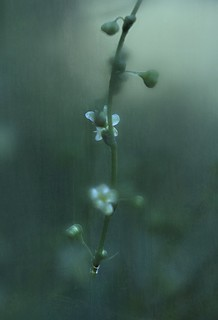 delicate delight in fading light | by paloetic