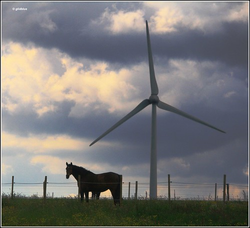 Horse in the wind | by glidblue