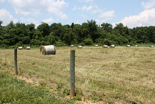 Harvesting excess pasture growth | by baalands
