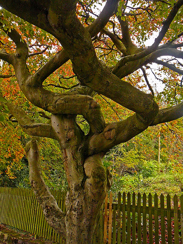 Tree | by Tim Green aka atoach