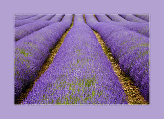 Fragrant Rows | by dougchinnery.com