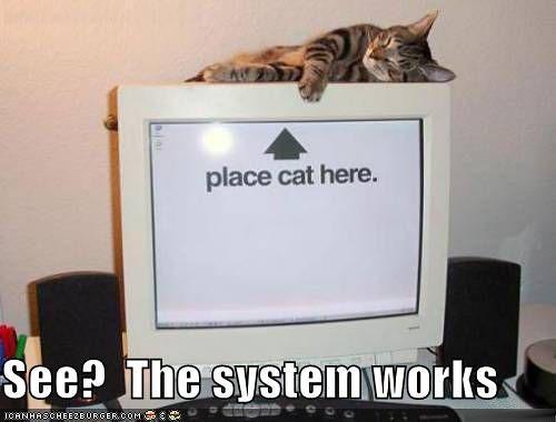 Ami Cat Free Shipping