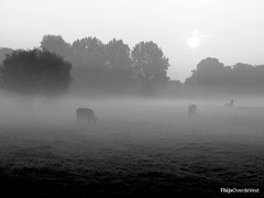 Early morning fog | by Thijs Over de Vest