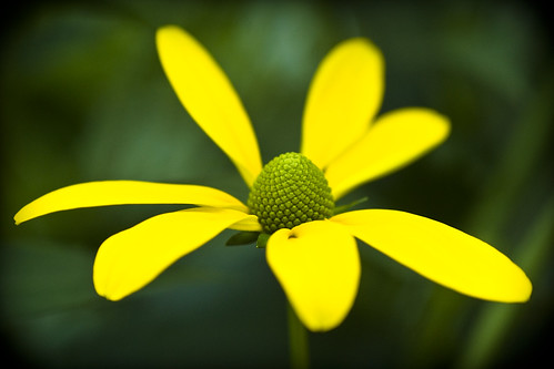 Yellow on green | by manganite