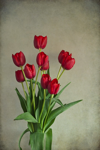Red Tulips Vertical | by Ana Magalhaes Fotografia