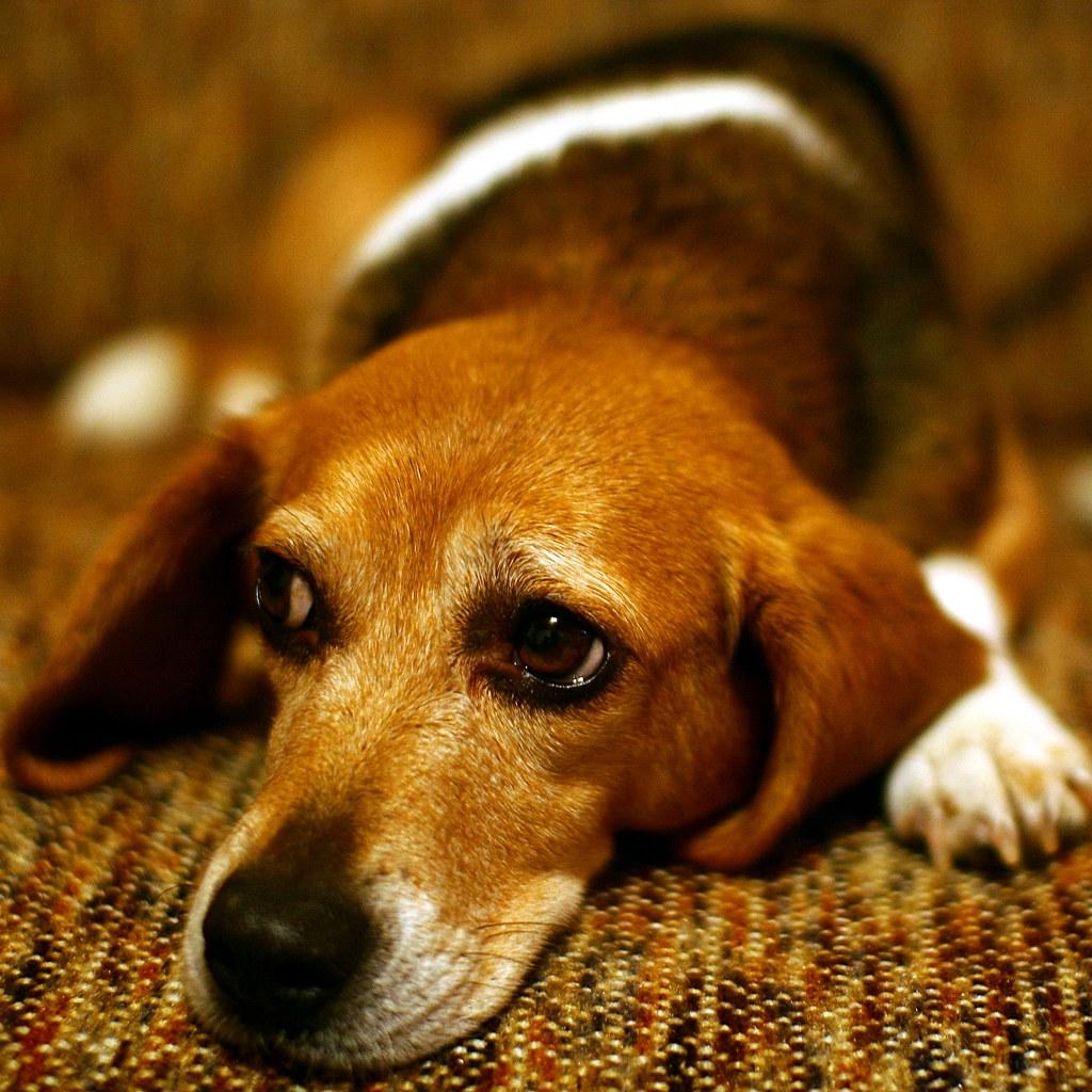 Sad Puppy Dog Eyes On A Furry Friday Tgiff Everyone Martin