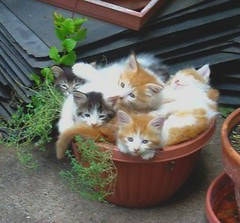 Pot of kittens | by kittycritters