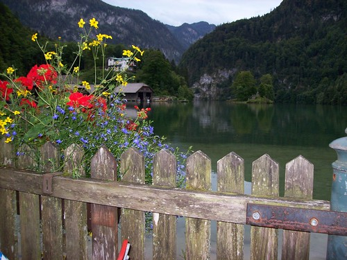 Flowers and Fence | by Tobi_2008