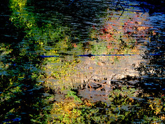 Swamp reflections a la Claude Monet | by EOSXTi