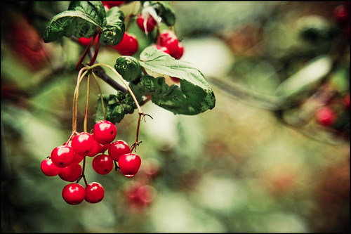 Cherries or not cherries, this is the dilemma! | by Manlio Castagna